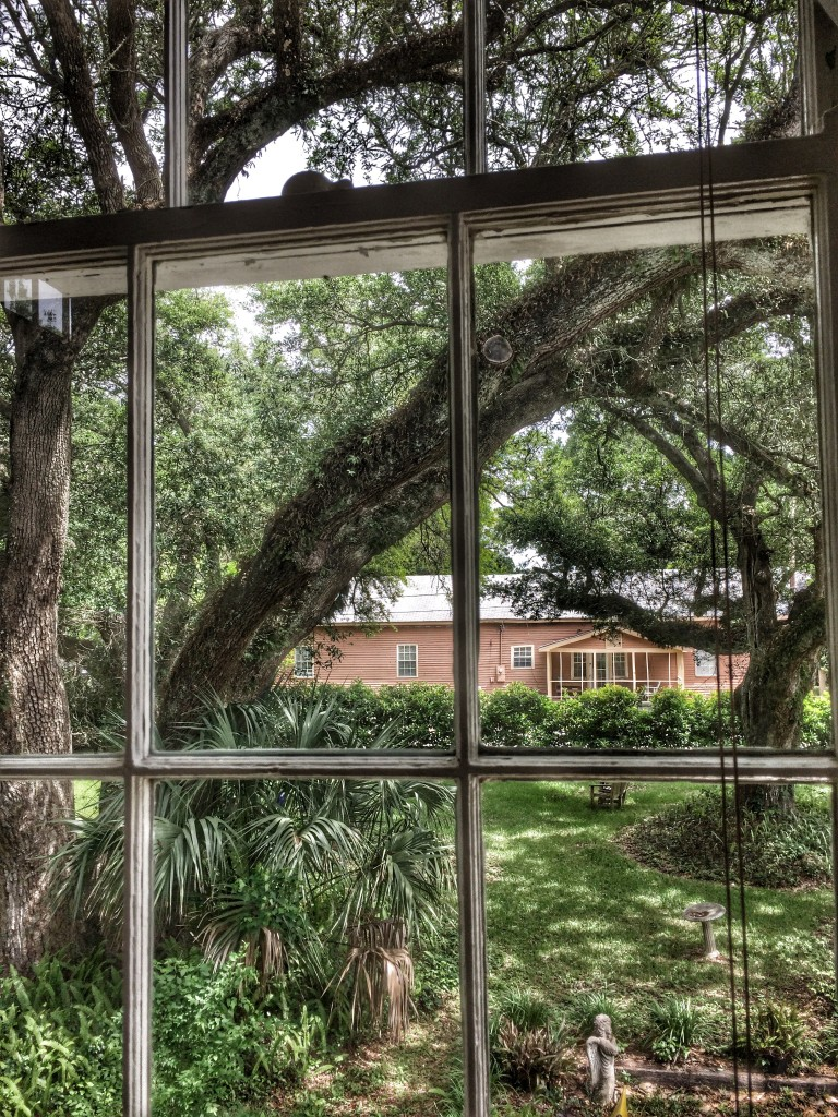 A look out of a Bay St. Louis residence at one of the Live Oak Trees that still remain after Hurricane Katrina destroyed many of them.