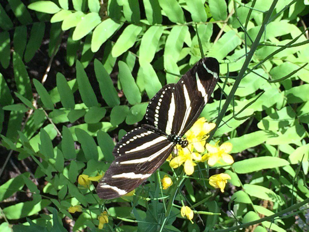 Buttefly Garden