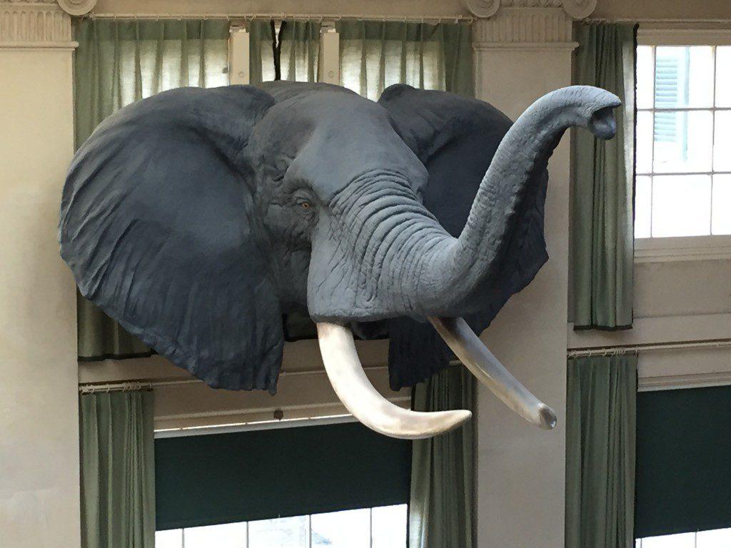 Elephant Kodak